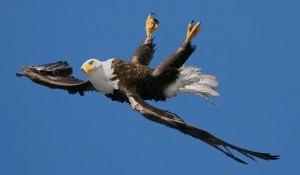 Upsidedown Eagle
